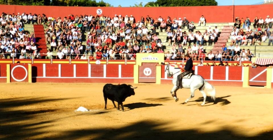 Caballos, Jinetes y Toros en el ruedo Fuengirola 2012 07