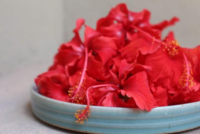 paticheri hibiscus flower syrup (2)