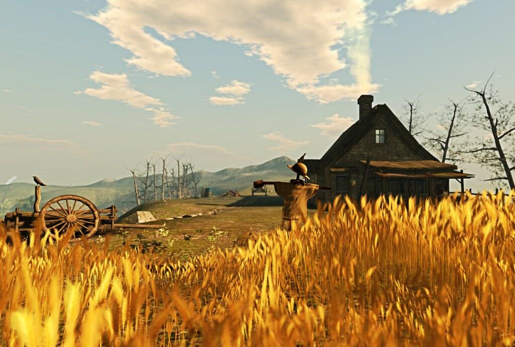 The cornfield at Roche