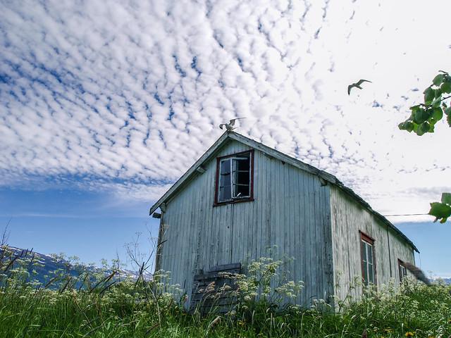 Sea gulls & summer