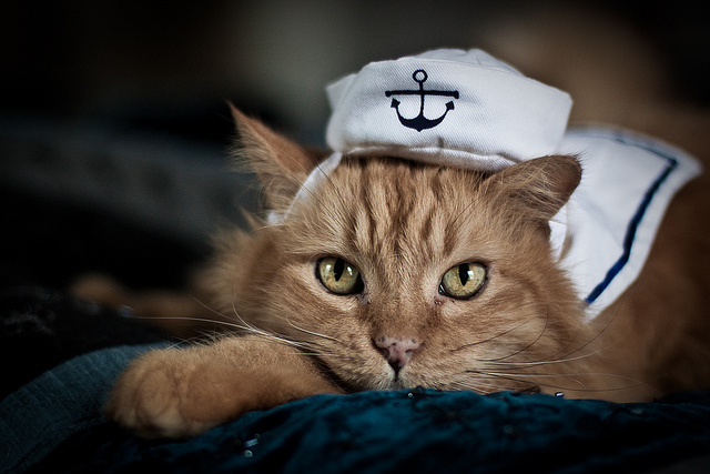 Puddy sailor