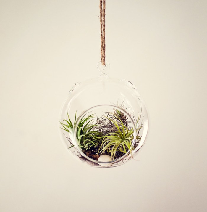 Hanging Tillandsia Air Plant Glass Globe Terrarium