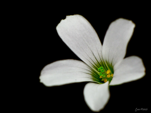 Macro white flower in dark background