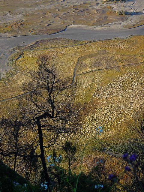 The plateau near Mt Bromo