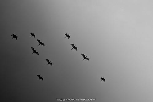 Flight towards light