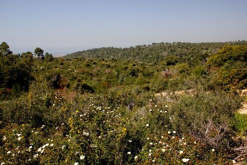 Etsba Ridge, Carmel Mountain