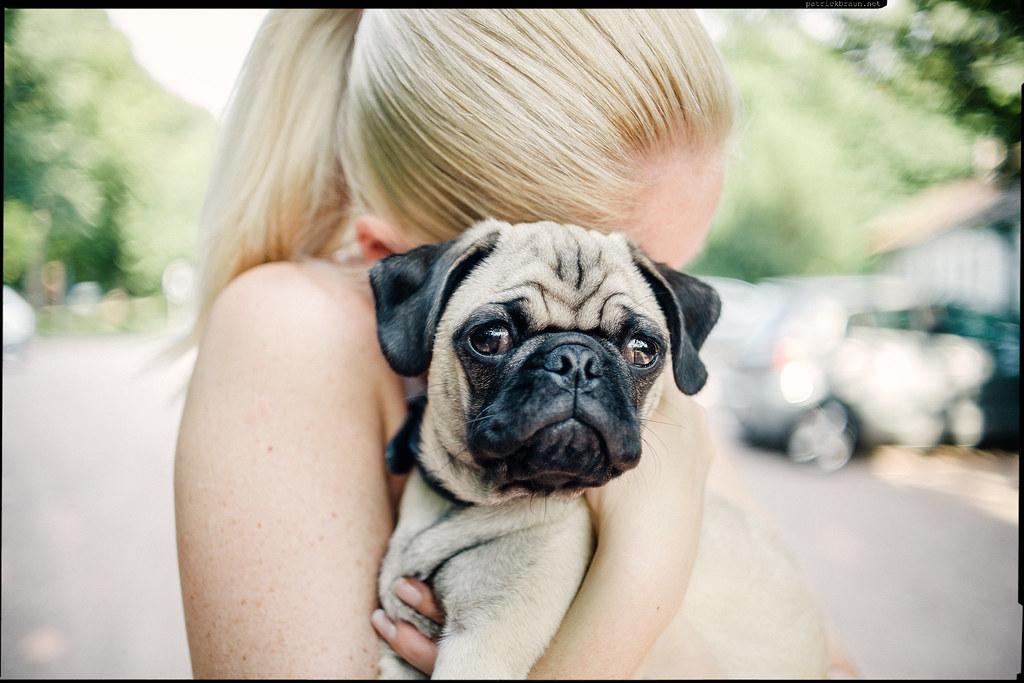 cuddling the pug