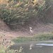 Parc National Des Deux Bale, Burkina Faso - IMG_1127_CR2_v1