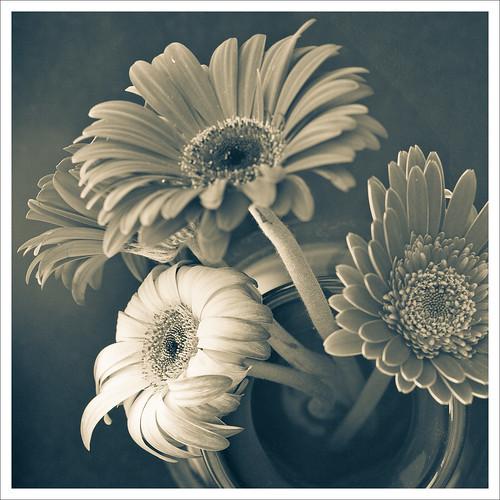 la più bella III by Luiz L.