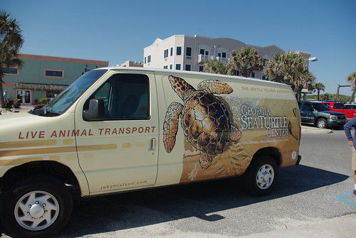 the good folks from Georgia Sea Turtle Center in Jekyll Island!