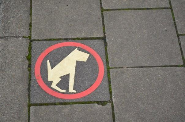 Dog spot