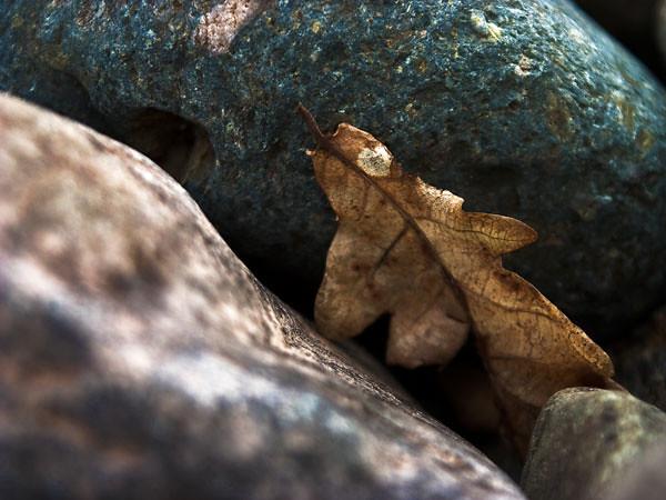 leaf-stuck-in-pebbles