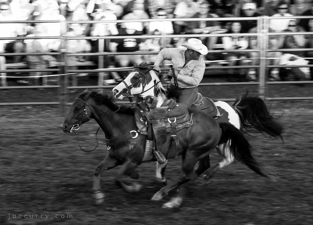 Rodeo & horses, Hamel