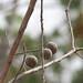 Trees in Nigeria - IMG_2346_CR2_v1