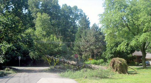 20120630 0836 - storm damage while yardsaleing - Rose & Valleybrook intersection - IMG_4515