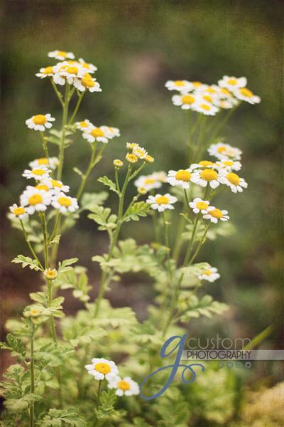 30 - floral 7 texture