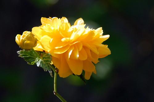 Arbres en fleurs HD-016