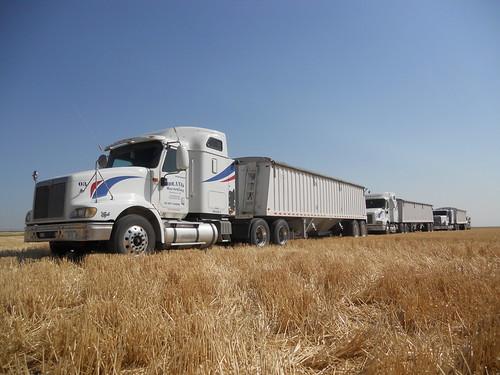 3 trucks empty trucks in the field