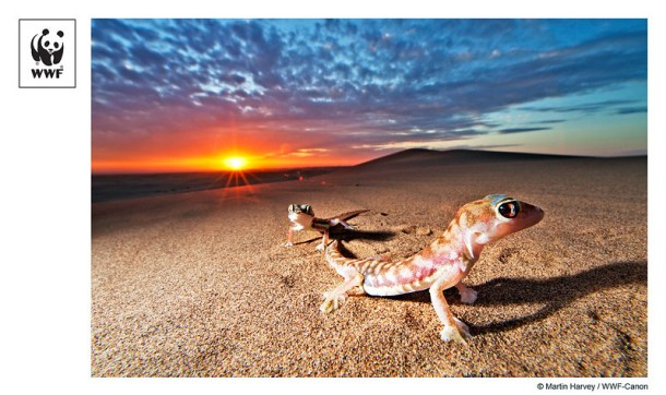 Pic of the Week #25 - Web footed geckos in Namibia