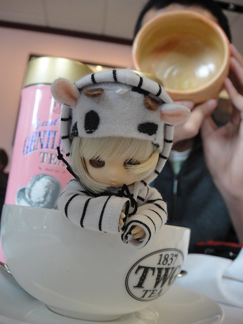 Little Moo in a teacup