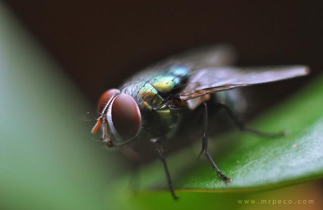 Lalat 2