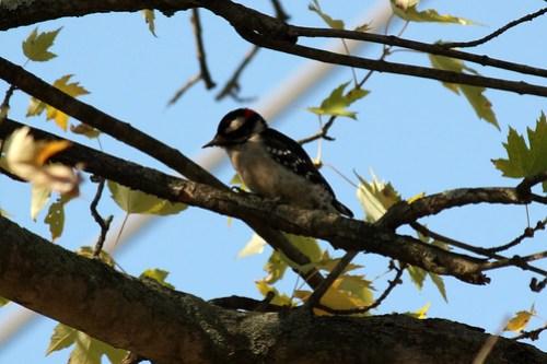 20121106_Birds_037