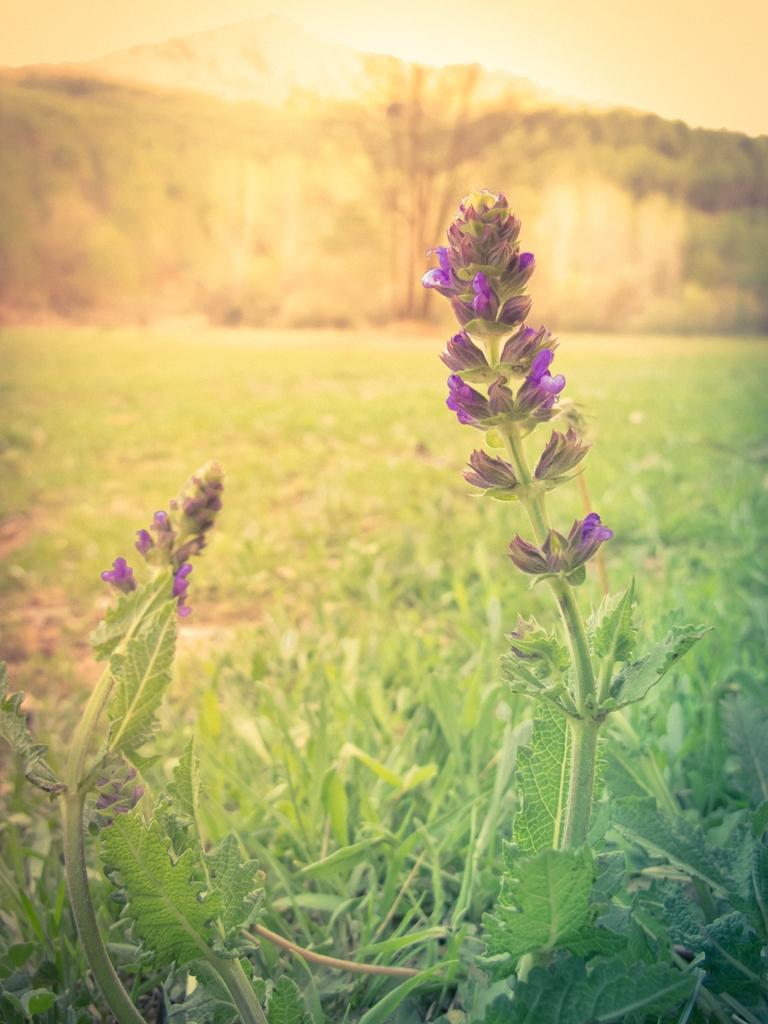 20 Flores