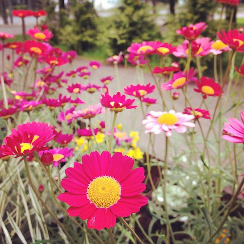 Flowers @ Kadrioru Park