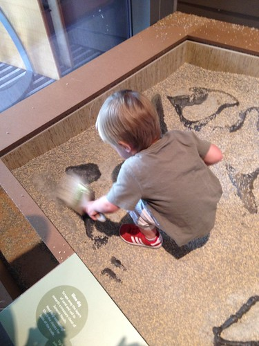 little paleontologist
