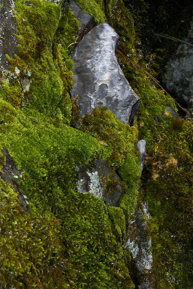 Munson Creek moss