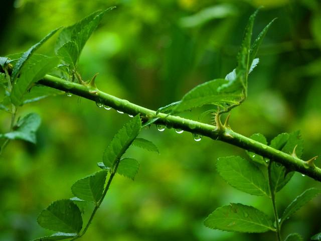 Rain Droplet  ©  Nicolas Liu