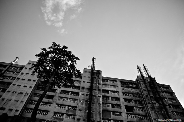 lone tree by the industrial building