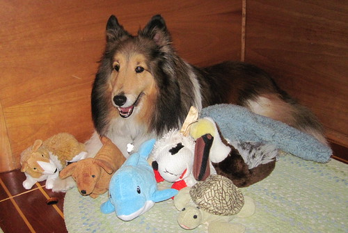 Bailey brought all his favorite toys