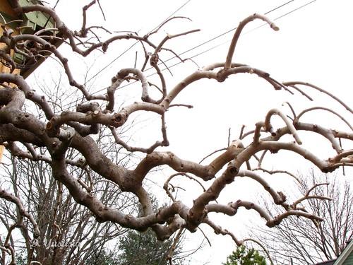 Peculiar Tree (3)