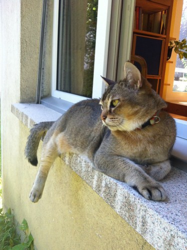 Quintus lounging outside eclau