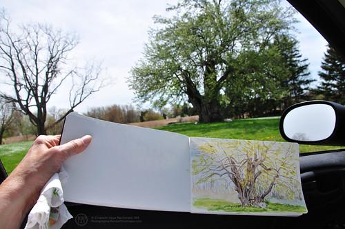Over 200 year old Jesuit or Joshuah Pear Tree by photographerpainterprintmaker