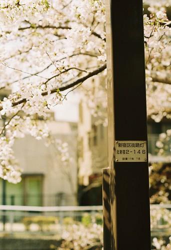 街路灯と桜