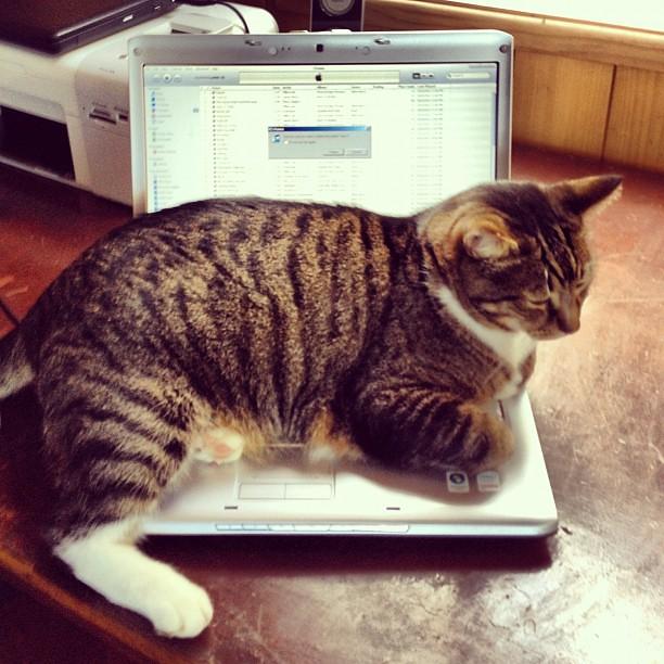 No computer for you! #cat #winning #catsofinstagram #laptop