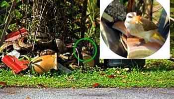 Sudah nampak dah!!!! Burung diatas pasu pecah