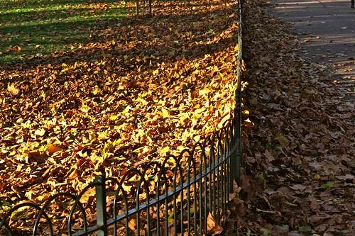 Crispy, Golden Leaves