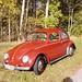 Käfer rot