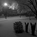 The Snow Has Started, February 04, 2012