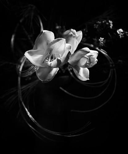 flowers_210