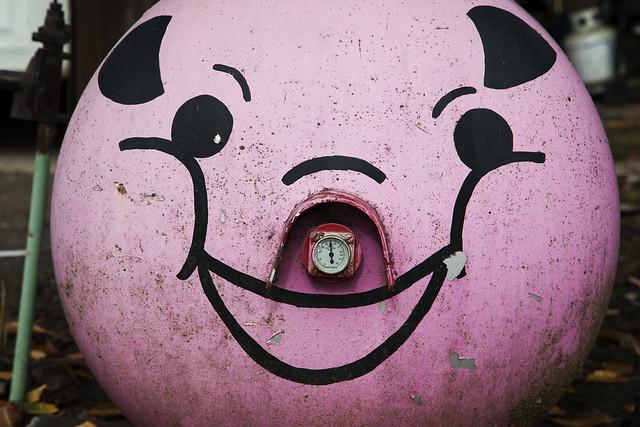 Smiley Pig