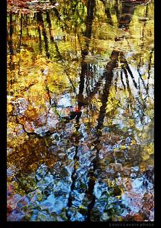 Étang - The Pond