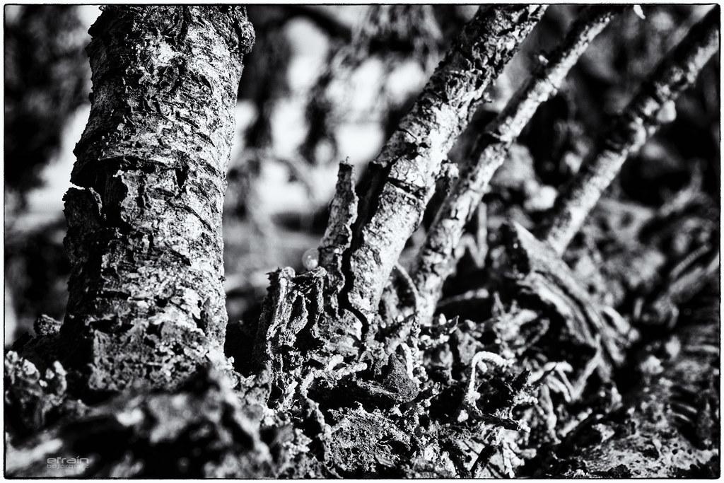 2012-01-03: No hagas leña del árbol caído