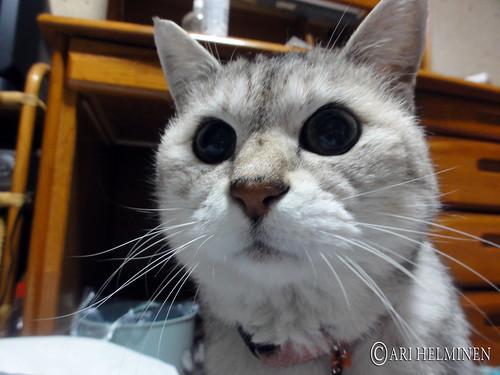 Beautiful Chibi