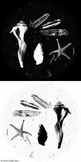 Sea 4 - Black & White