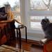Amelia & Scooter, January 23, 2012