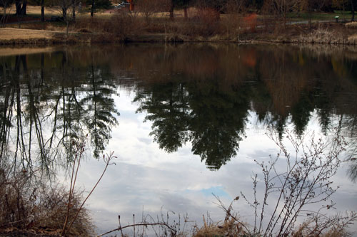 Meadowlark Botanical Gardens reflection